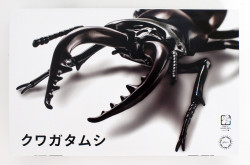 Fujimi 170732 Biology Edition Stag Beetle